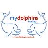 my_dolphins